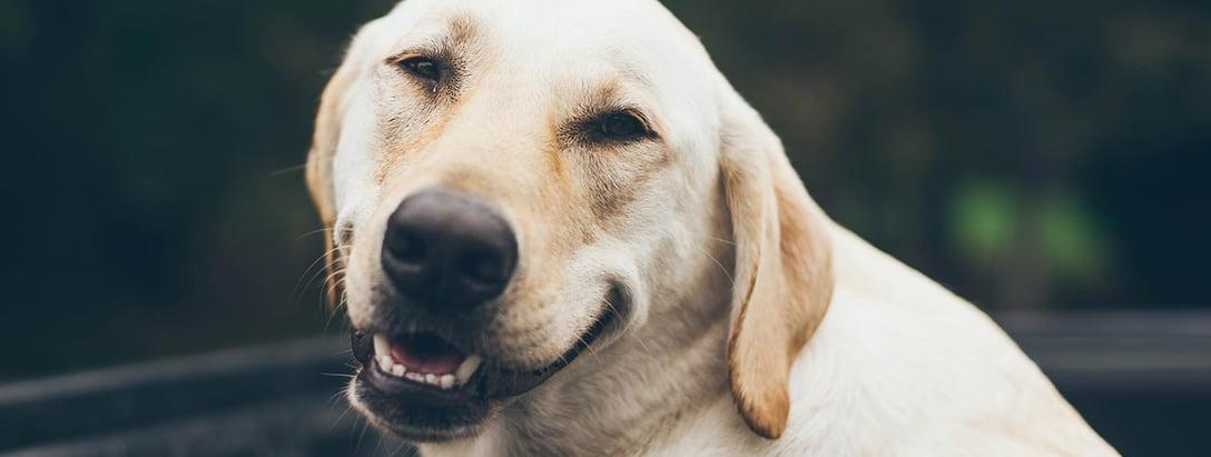 Learning 11 - Hoe tover je een glimlach op het gezicht van jouw kijker?