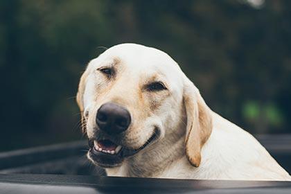 Neuromarketing Learning 11 - Hoe tover je een glimlach op het gezicht van jouw kijker?